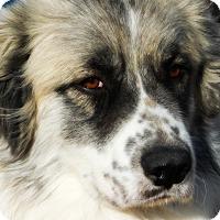 Adopt A Pet :: Turkey - Kyle, TX