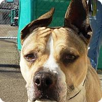 Adopt A Pet :: Cara - Roseville, CA