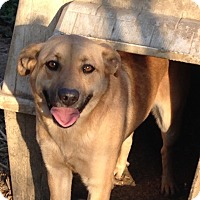 Adopt A Pet :: Mama June - E. Greenwhich, RI