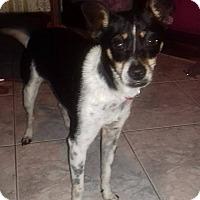 Adopt A Pet :: Lu - San Diego, CA