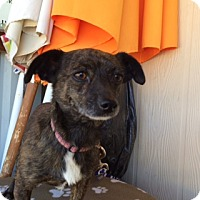 Adopt A Pet :: LEVI - Elk Grove, CA