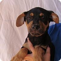 Adopt A Pet :: Caeser - Oviedo, FL