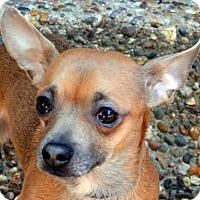 Adopt A Pet :: Stitch - Bridgeton, MO