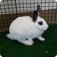 Adopt A Pet :: Roger - Chula Vista, CA