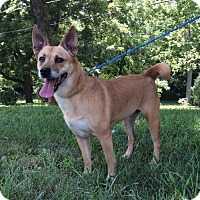 Adopt A Pet :: Peaches - Atchison, KS
