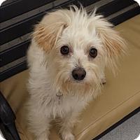 Adopt A Pet :: Jordan - Encino, CA