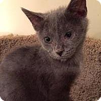 Adopt A Pet :: Ben - East Hanover, NJ
