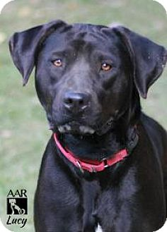 Labrador Retriever Mix Dog for adoption in Tomball, Texas - Lucy