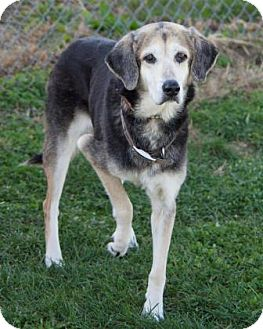 Hound (Unknown Type) Mix Dog for adoption in Bedford, Indiana - Nancy