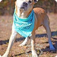 Adopt A Pet :: Sam - Fort Valley, GA