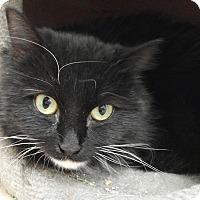 Adopt A Pet :: Cracker - Cloquet, MN