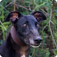 Adopt A Pet :: CET Rihannah - Douglasville, GA