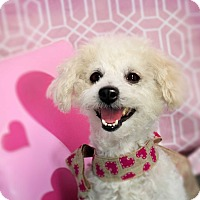 Adopt A Pet :: GUMBO (video) - Los Angeles, CA