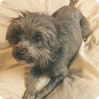 Adopt A Pet :: Dolly - Mesa, AZ
