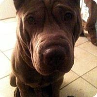 Adopt A Pet :: Lucas - Gainesville, FL