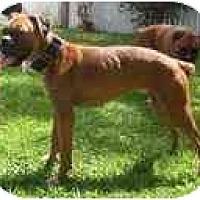 Adopt A Pet :: Britta - Thomasville, GA