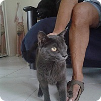 Adopt A Pet :: Jill - Deerfield Beach, FL