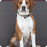 Adopt A Pet :: Frankie - Drumbo, ON