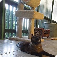Adopt A Pet :: HERSHEY - Makawao, HI