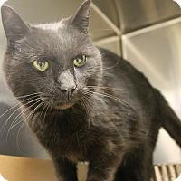 Adopt A Pet :: Panther - Harrisburg, NC