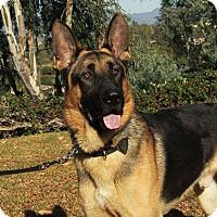 Adopt A Pet :: Cash - Laguna Niguel, CA