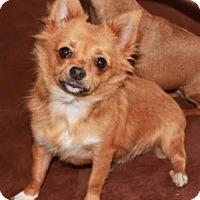 Adopt A Pet :: Painter - Salem, NH