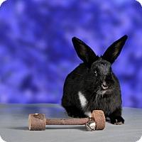 Adopt A Pet :: Schwarz - Marietta, GA