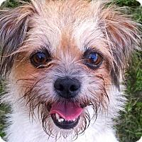 Adopt A Pet :: MINDI - sweet, young girl - Terra Ceia, FL