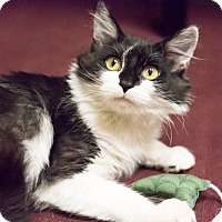 Adopt A Pet :: Hannah - Chicago, IL