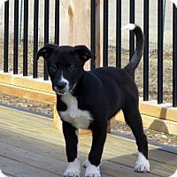 Adopt A Pet :: Tucker - Evansville, IN