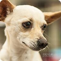 Adopt A Pet :: Dot - Gainesville, FL