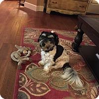 Adopt A Pet :: Steinway - Lodi, CA