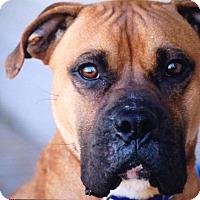 Adopt A Pet :: Mingo - Westminster, MD