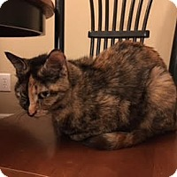 Adopt A Pet :: Tessa - Acushnet, MA