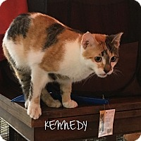 Adopt A Pet :: KENNEDY - Great Neck, NY