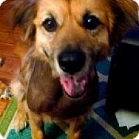 Adopt A Pet :: SAKURA - Albany, NY