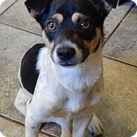 Adopt A Pet :: Banjo(13 lb) Great Family Pet! - SUSSEX, NJ