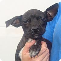 Adopt A Pet :: Kali - Oviedo, FL