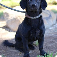 Adopt A Pet :: Gabby Douglas - San Diego, CA