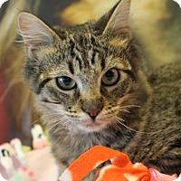 Adopt A Pet :: Lancel - Wichita, KS