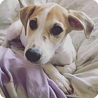 Adopt A Pet :: Ms. P - Lexington, KY