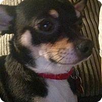 Adopt A Pet :: Buddy - Potomac, MD