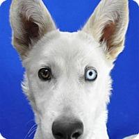 Adopt A Pet :: Luna - Pagosa Springs, CO