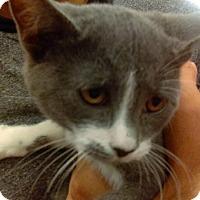 Adopt A Pet :: Iris - Lancaster, CA
