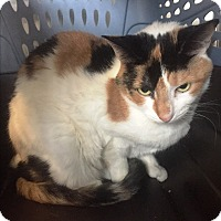 Adopt A Pet :: *FEE WAIVED - in foster* SIMBA - Wilmington, DE