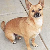 Adopt A Pet :: Olga - San Diego, CA