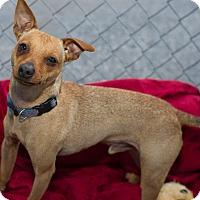 Adopt A Pet :: Milo - Fallbrook, CA