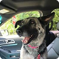 Adopt A Pet :: Naomi - Portland, ME