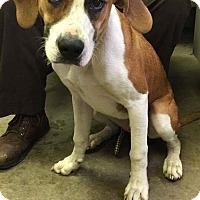 Adopt A Pet :: BOB - Cadiz, OH