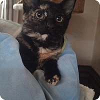 Adopt A Pet :: Gobbles - Cedar Rapids, IA